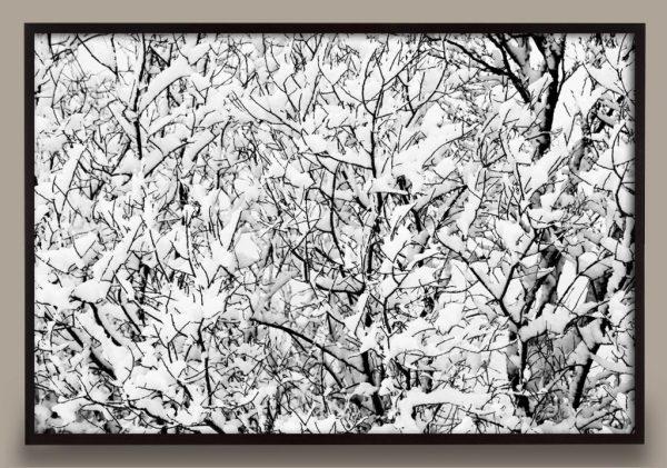Snow on Trees Photograph