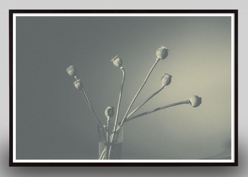 monochromatic flower still life photograph