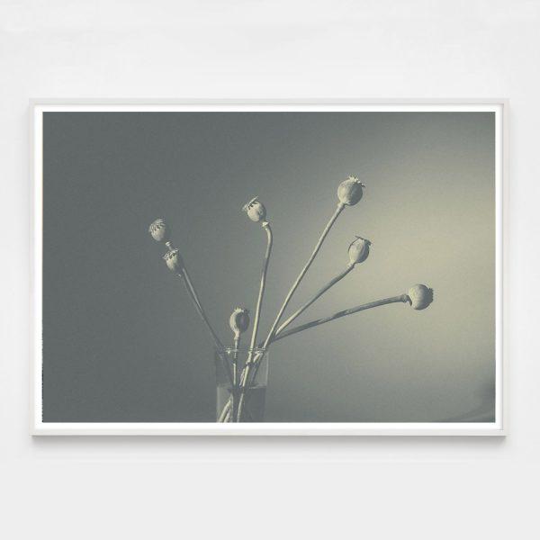poppy-horiz-white