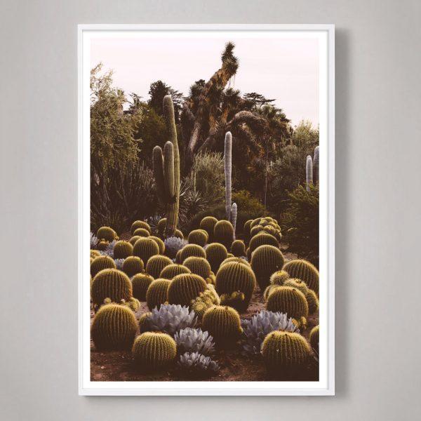 California-Cactus-01-white