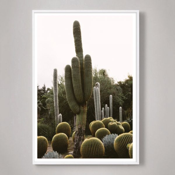 California-Cactus-02-white