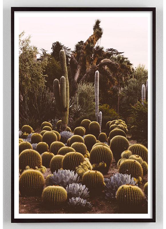 California Cactus photograph