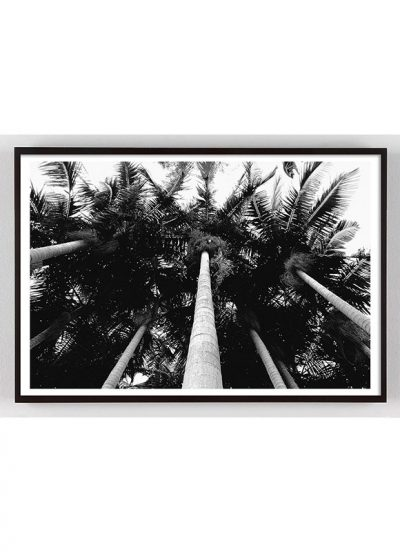 black and white palm tree photograph