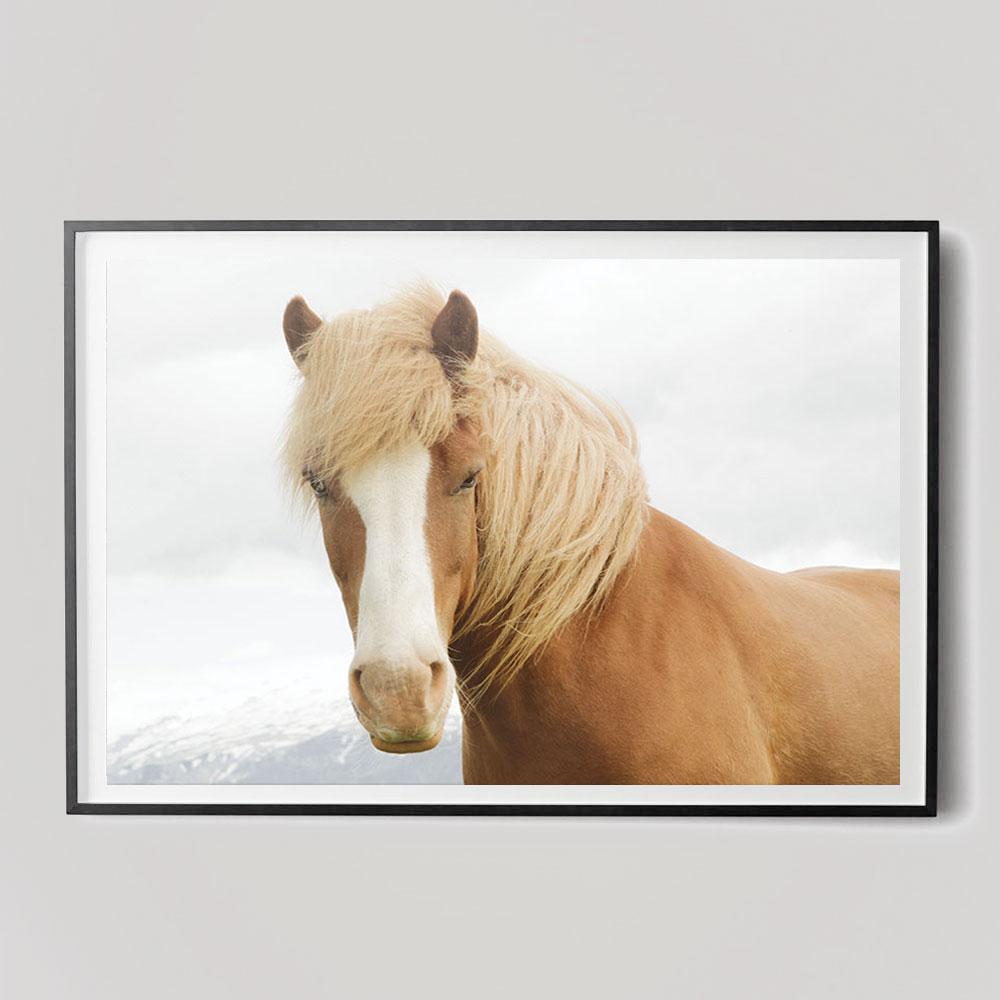 close-up horse portrait photograph