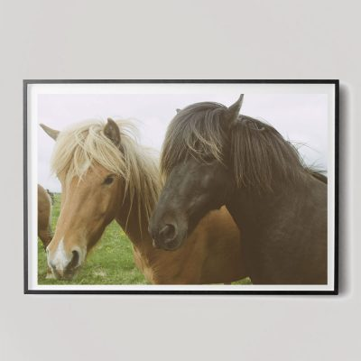two horses photograph