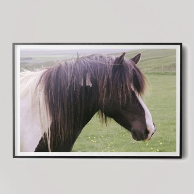 brown horse head photograph