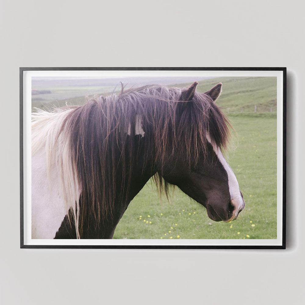 brown horse head photograph
