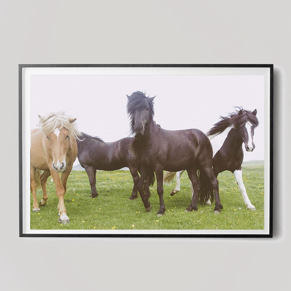 horse-trio