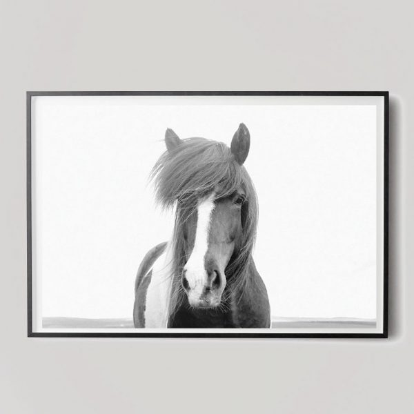 black and white icelandic horse photograph