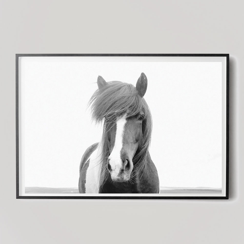 black and white icelandic horse photograph