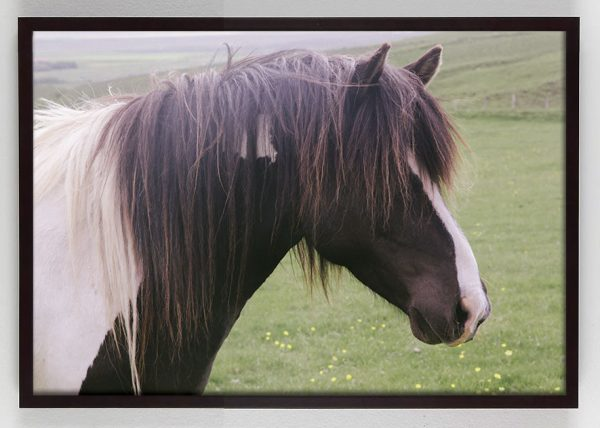 Brown Horse with white stripe