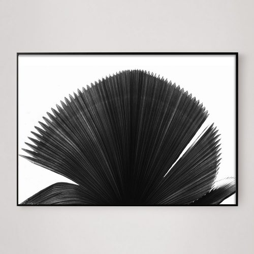large black and white palm frond photo