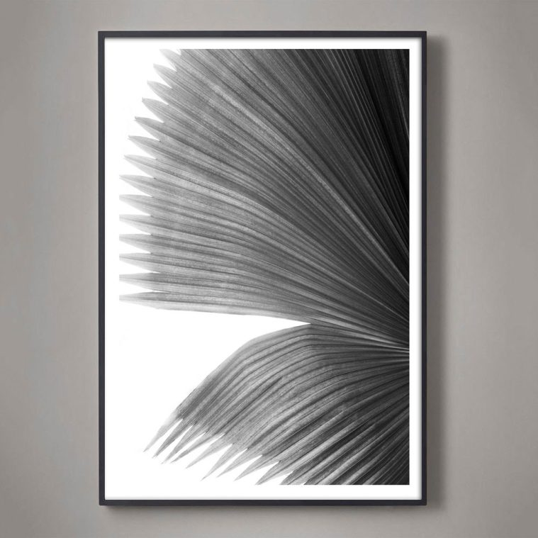 black and white palm frond photograph