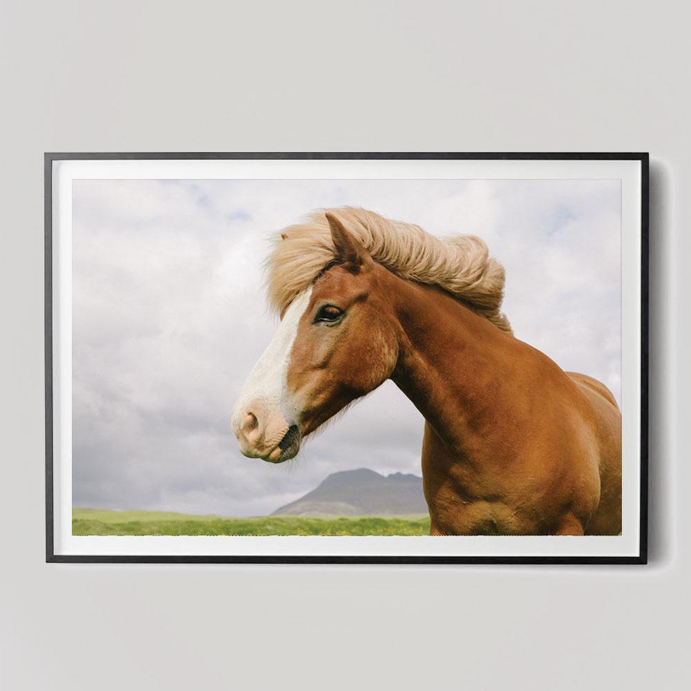 horse portrait photograph