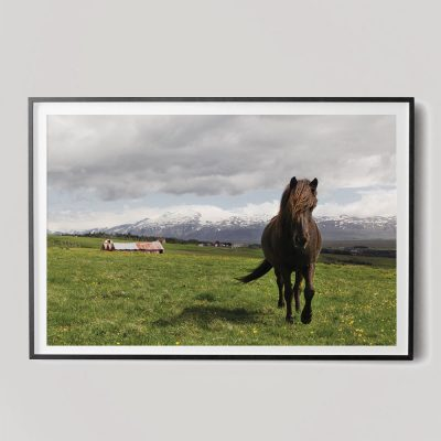 icelandic horse in landscape photograph