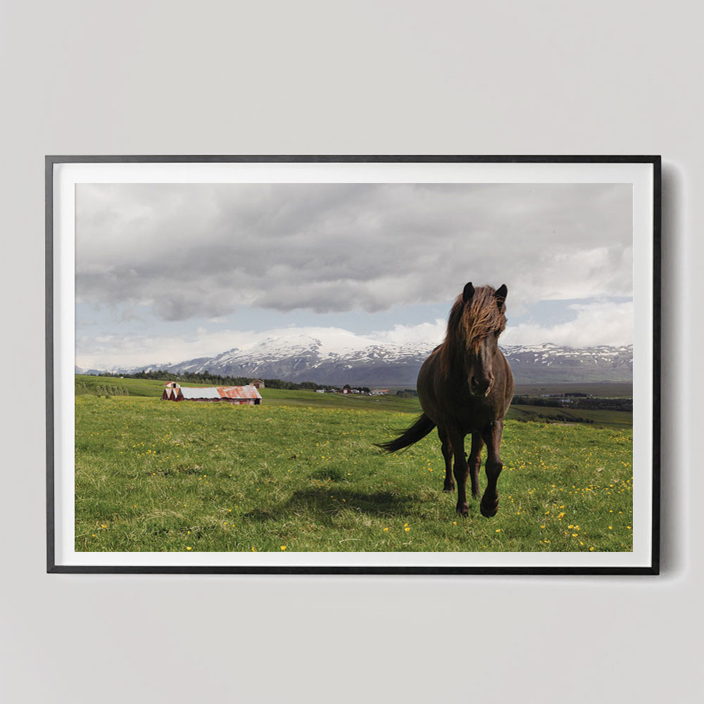 brown horse photograph in field