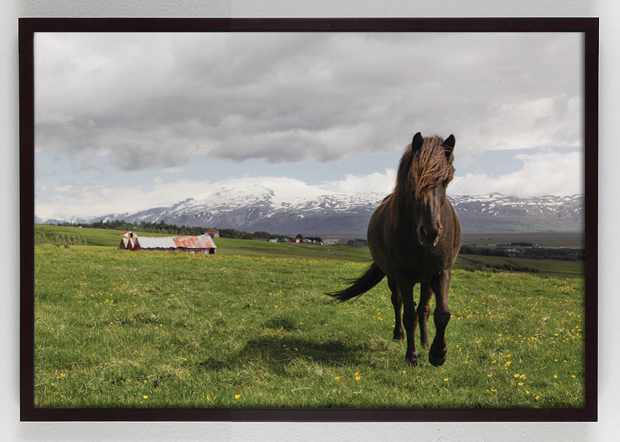 horse photography wall art