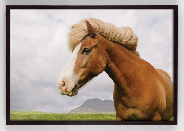 horse photography wall art