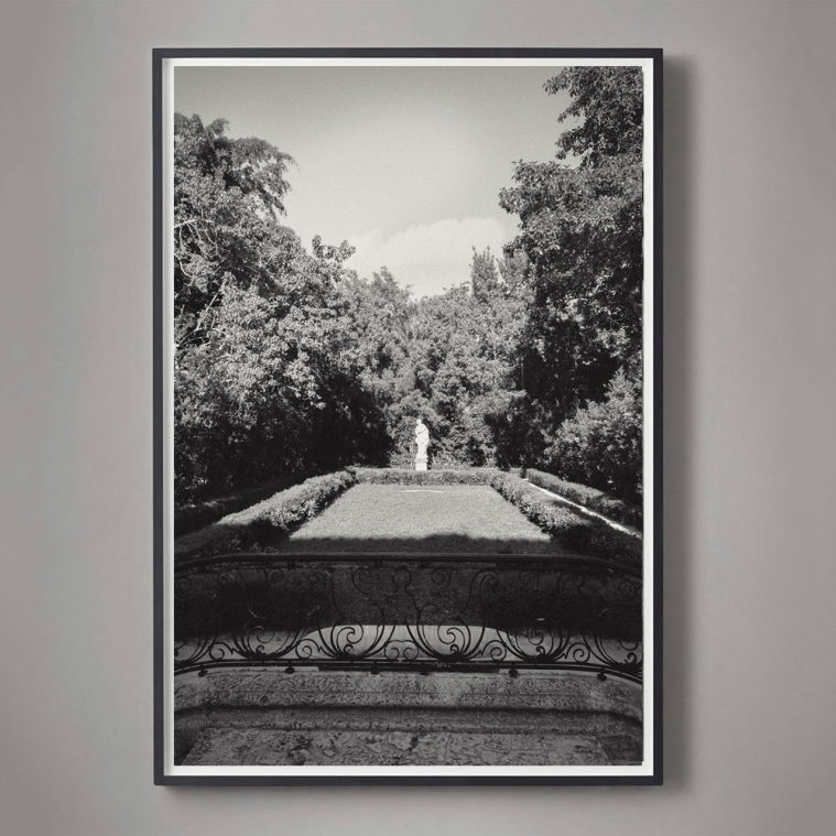 Black and White Photograph of Garden