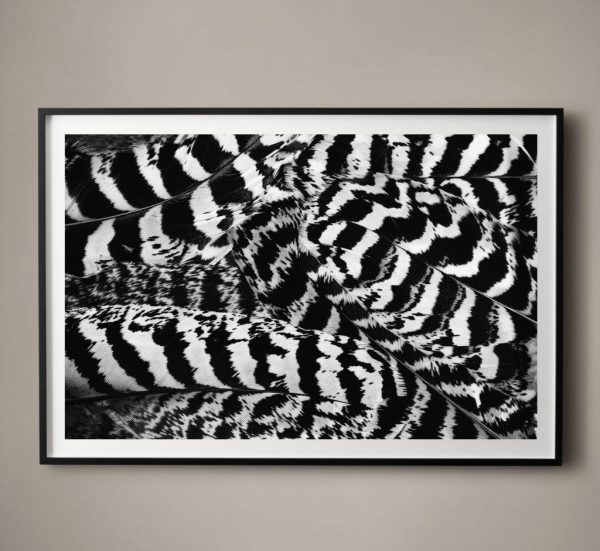 black and white feather art