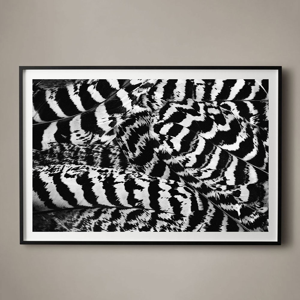 feather-striped-01