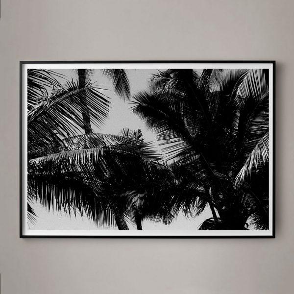 palm tree photographs