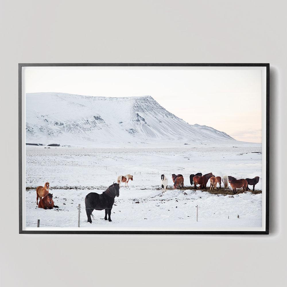 iceland horses photo