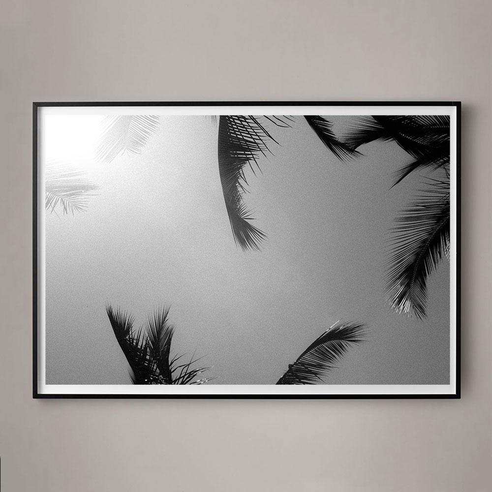 palm photograph