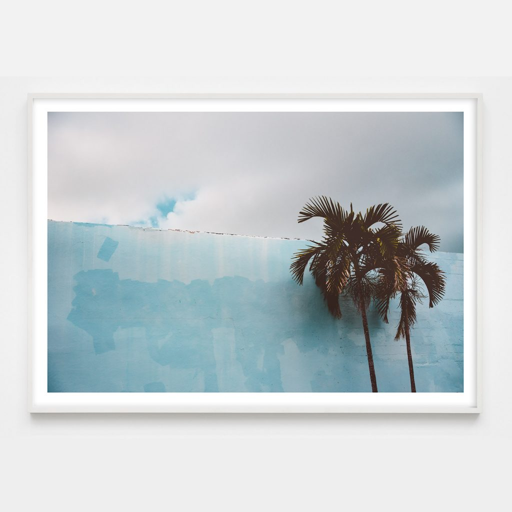 photograph with blue and palm trees