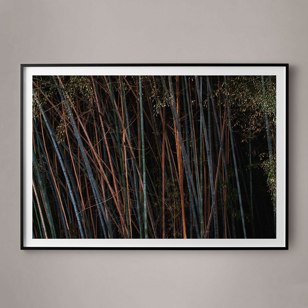 colored bamboo photography