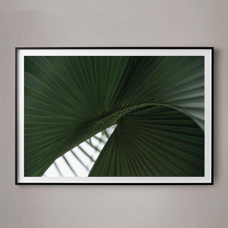 large plant photograph