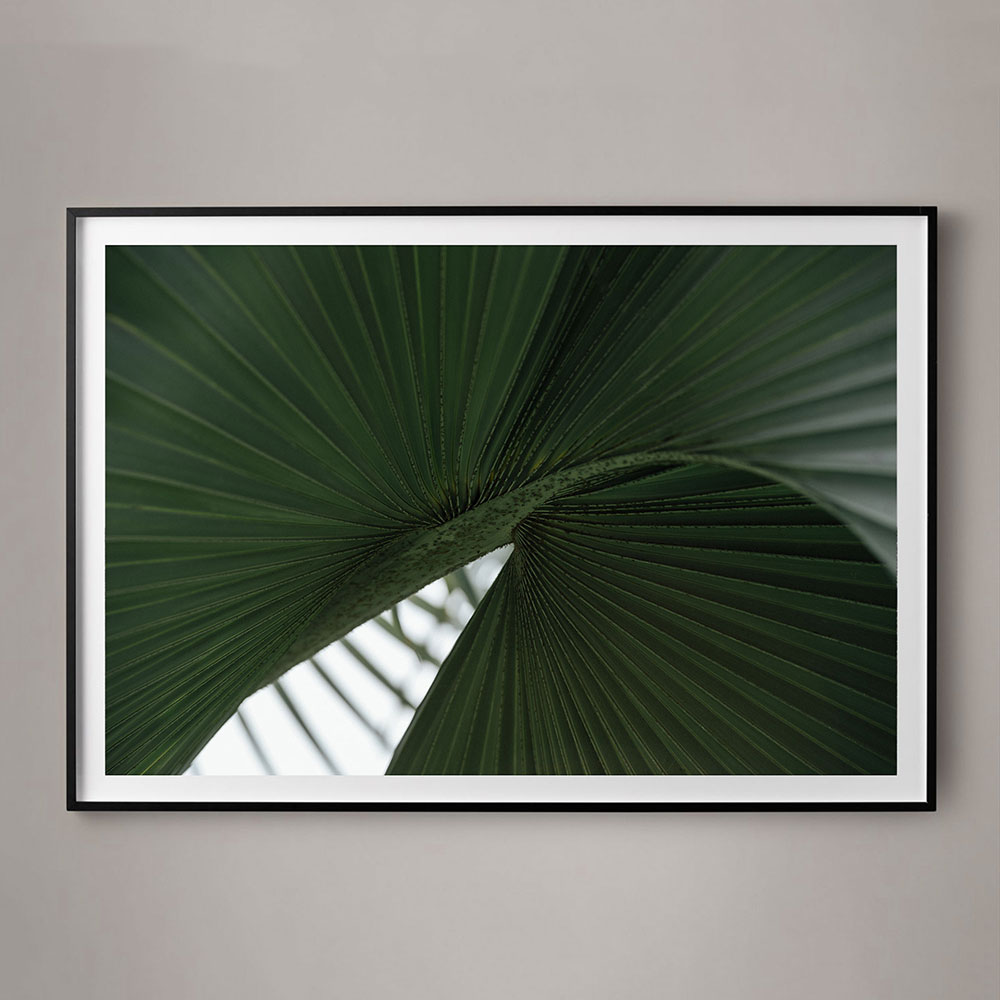abstract palm front photograph