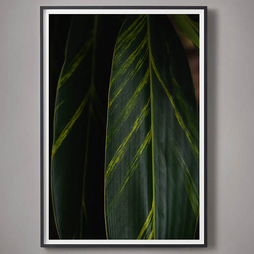 deep green tropical leaf color photograph