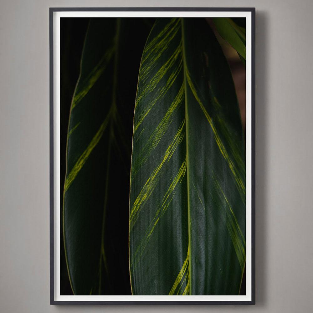 deep green tropical leaf color photograph