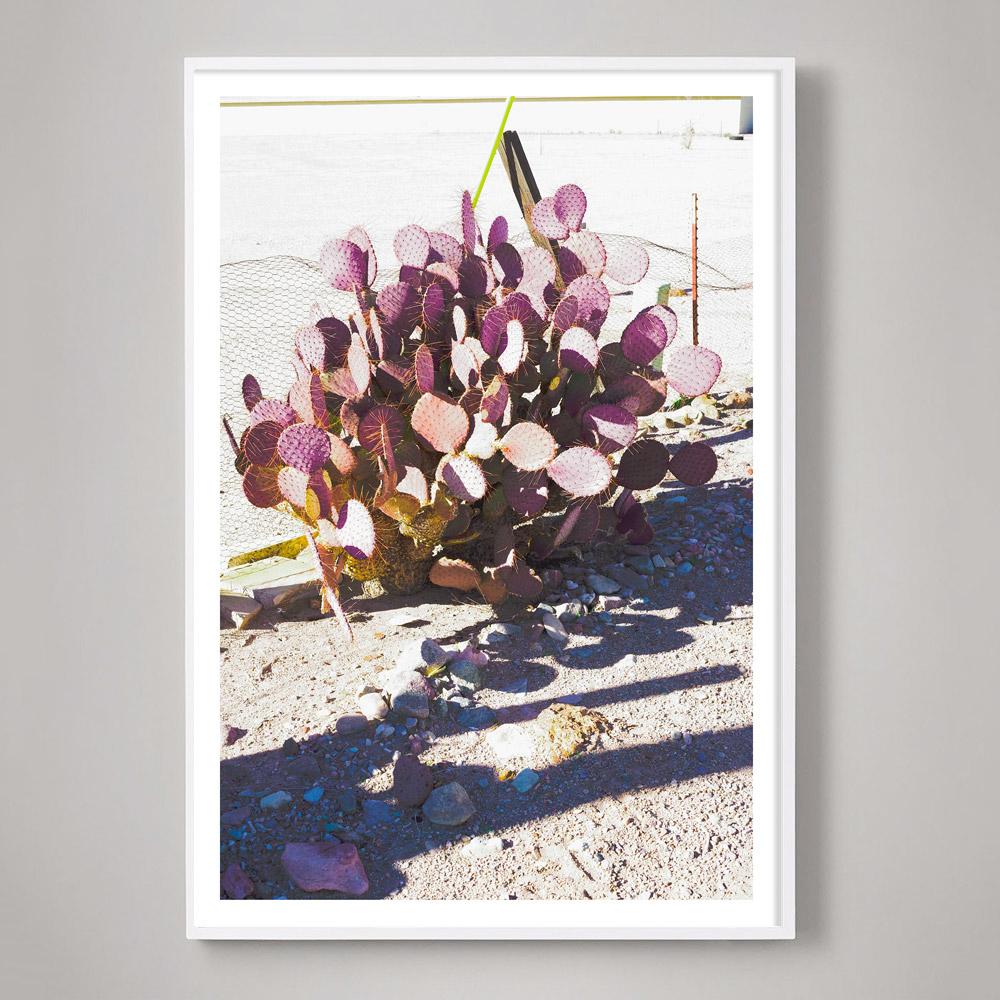 colorful cactus photo