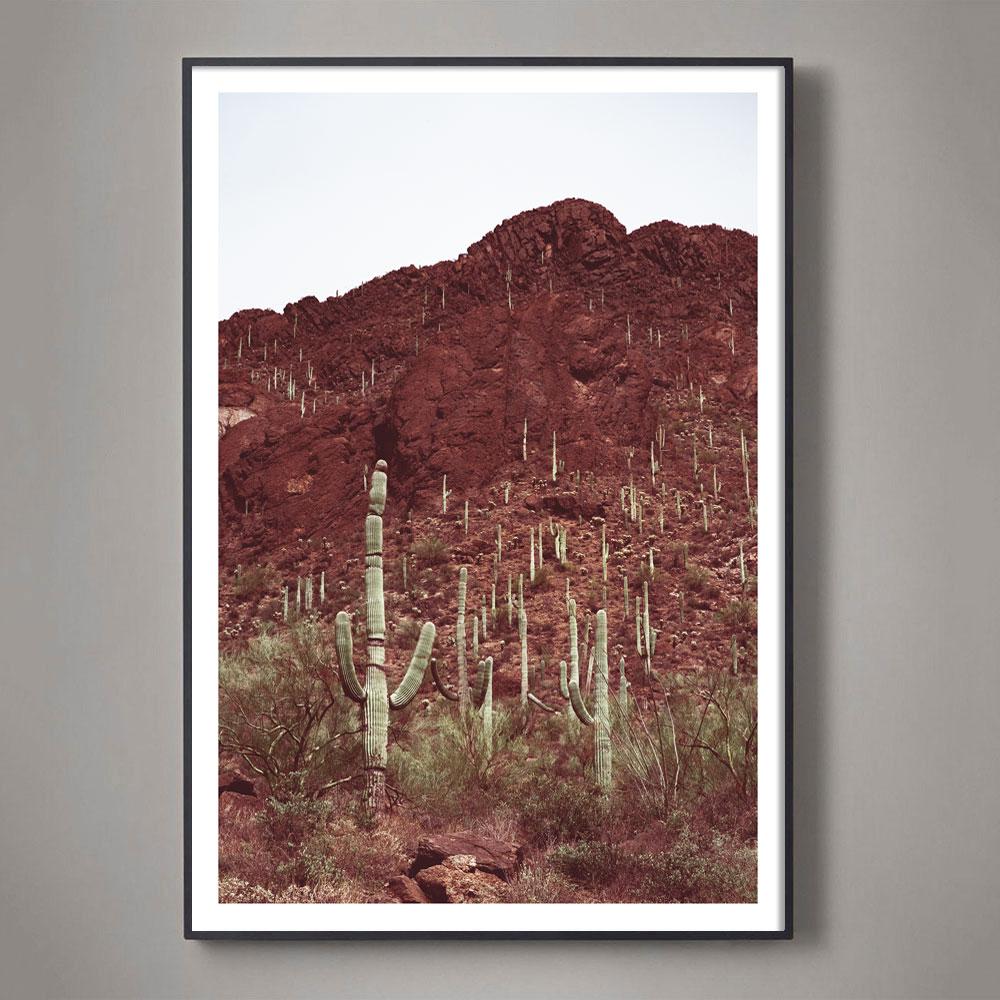 suagaro desert landscape color photograph
