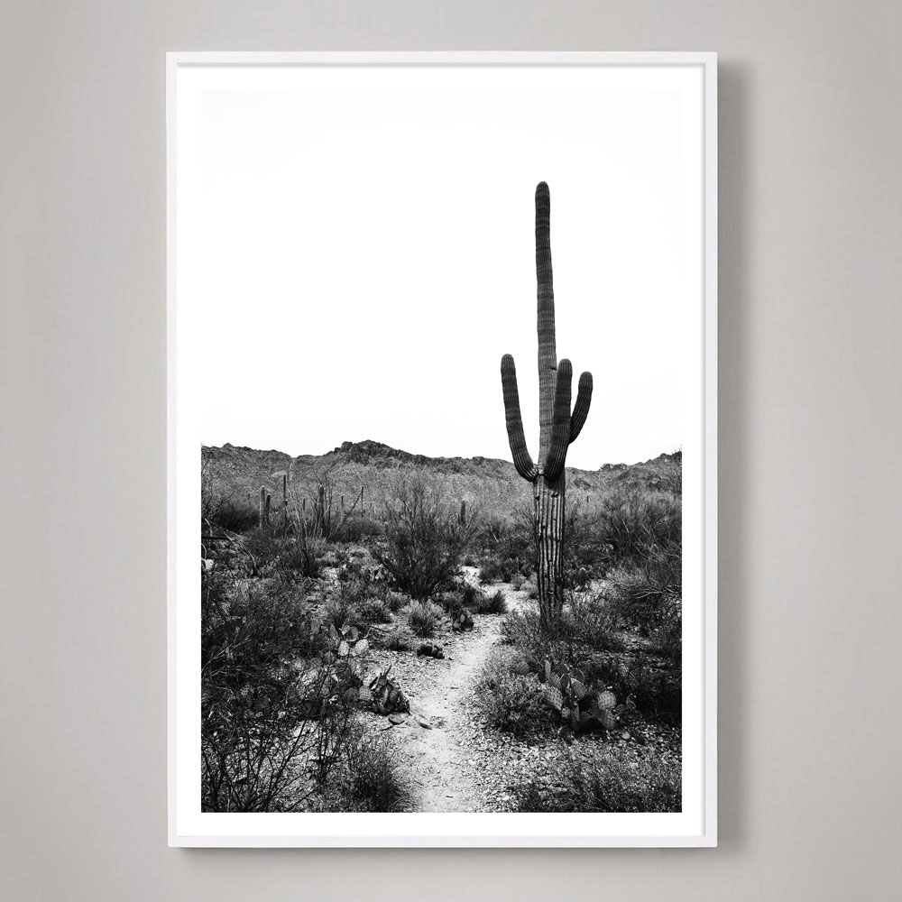 tucson saguaro cactus photograph